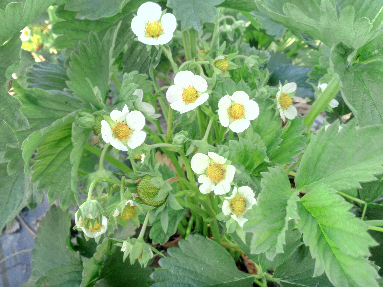 Kukkia Ja Jokunen Raakile
